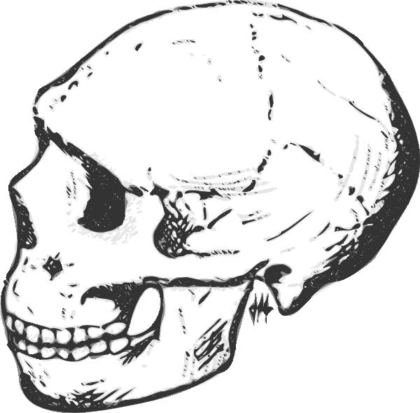 Skeleton clipart sideways. Skull grayscale clip art
