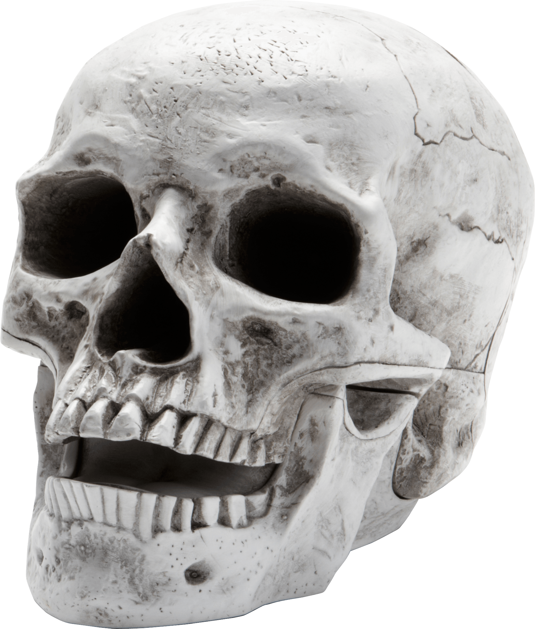 Clipart rock skull. Sideview large transparent png