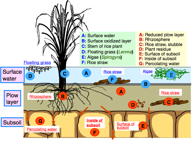Geology clipart soil formation. Collection of free discomposition