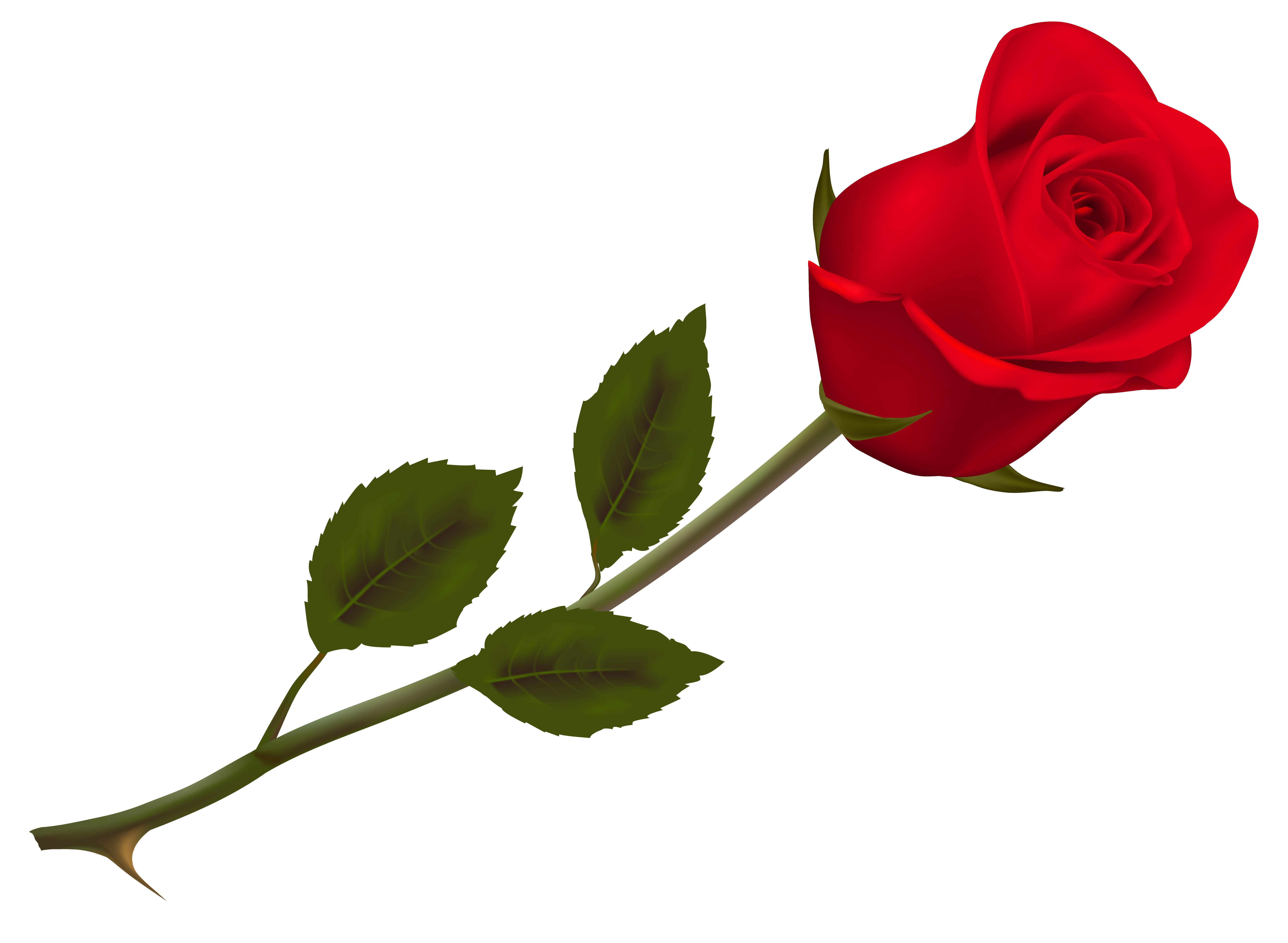 Transparent beautiful red rose. Clipart roses aesthetic