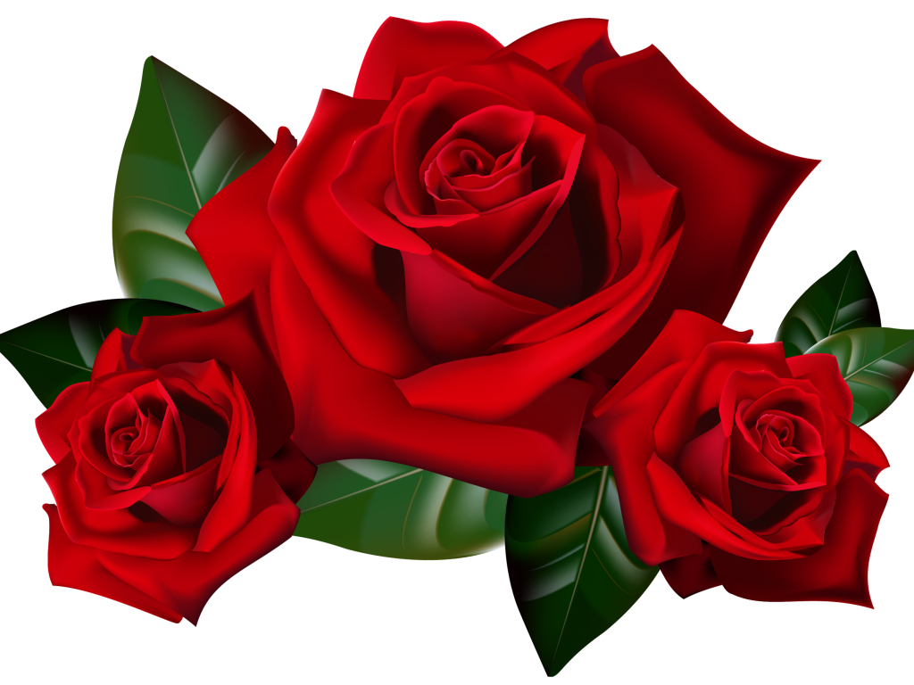 Clipart rose animated. Red roses png picture