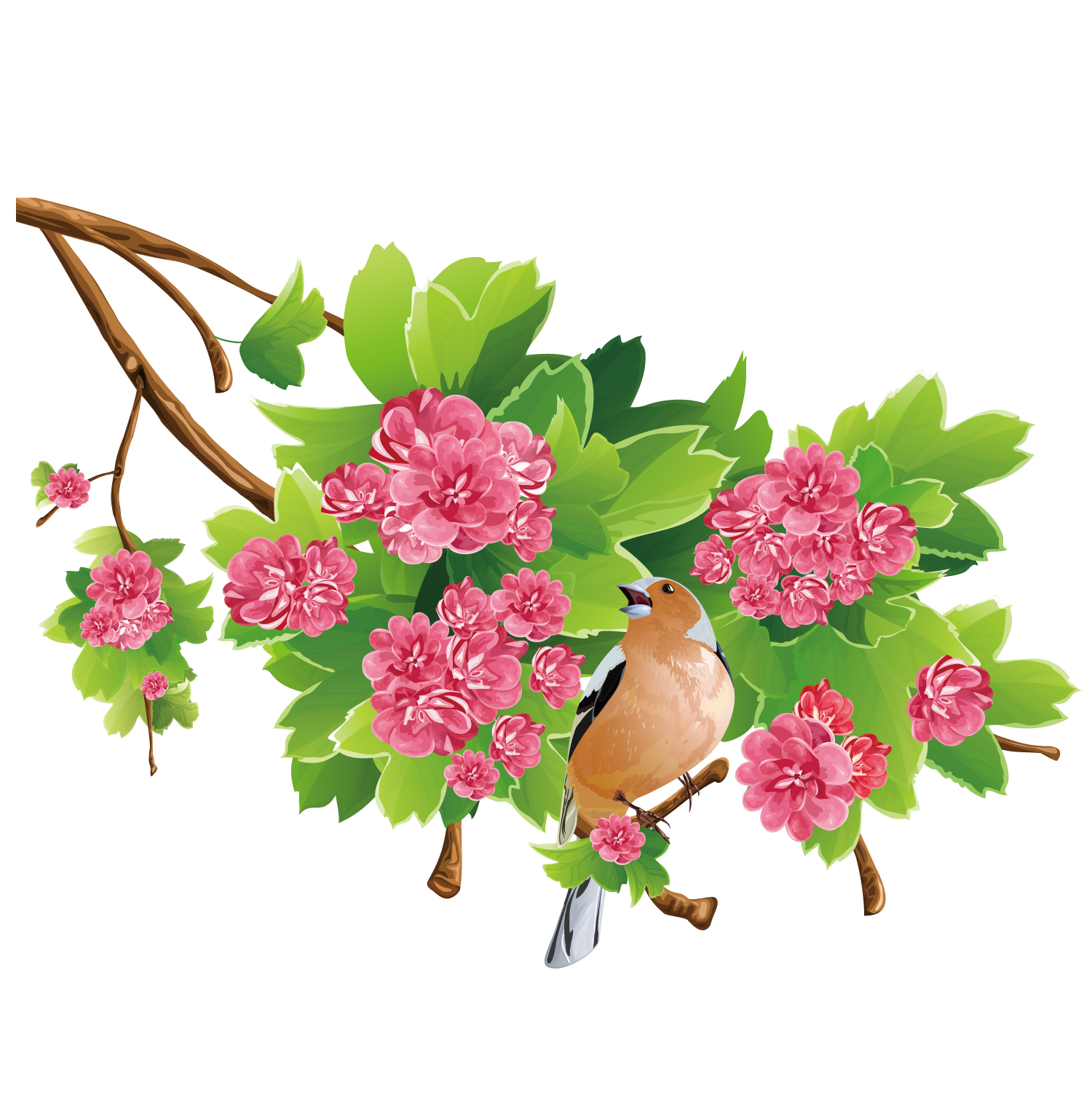 Flower free content clip. Clipart rose apple tree