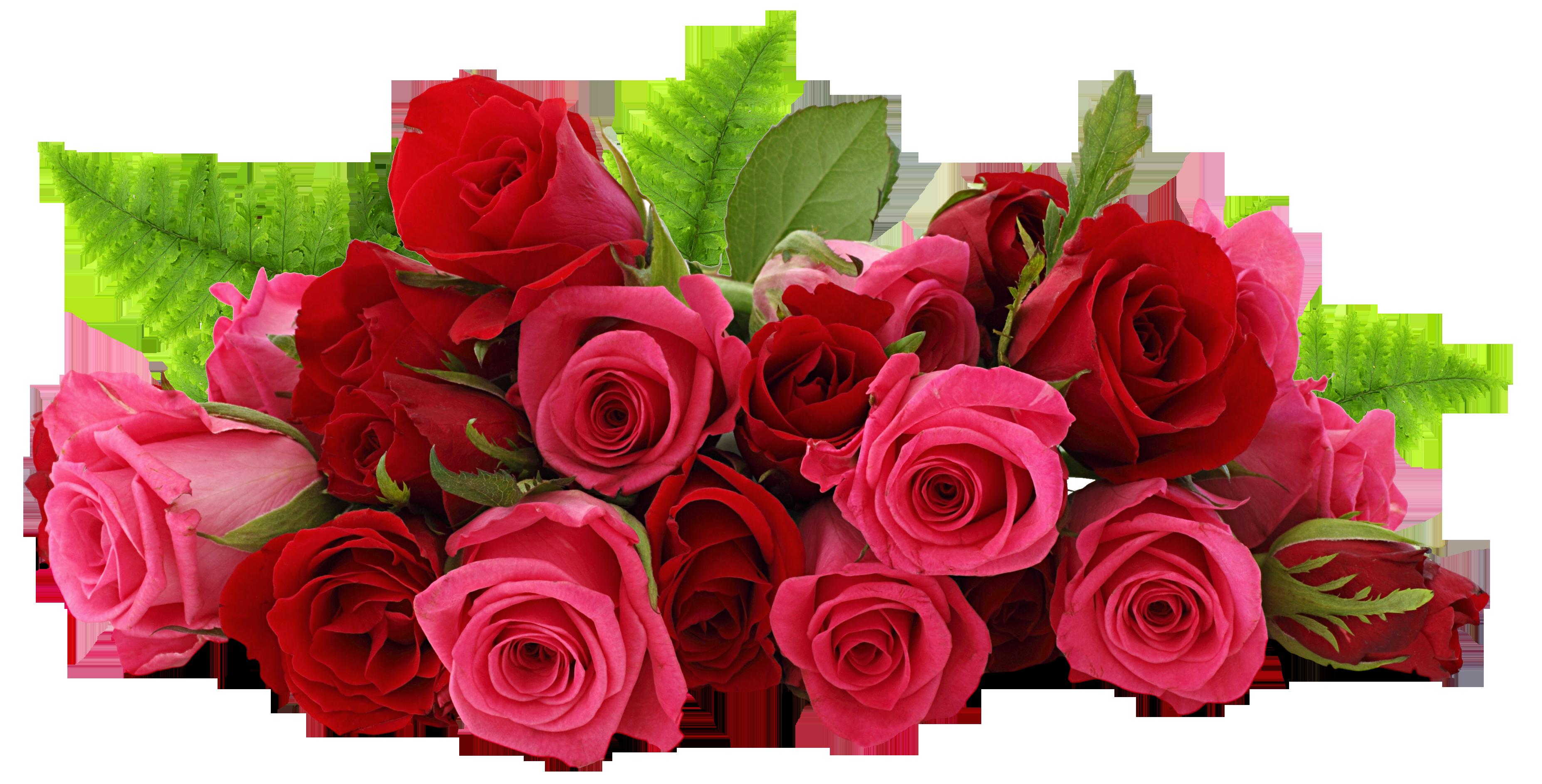 Rose clip art trees. Transparent png images roses