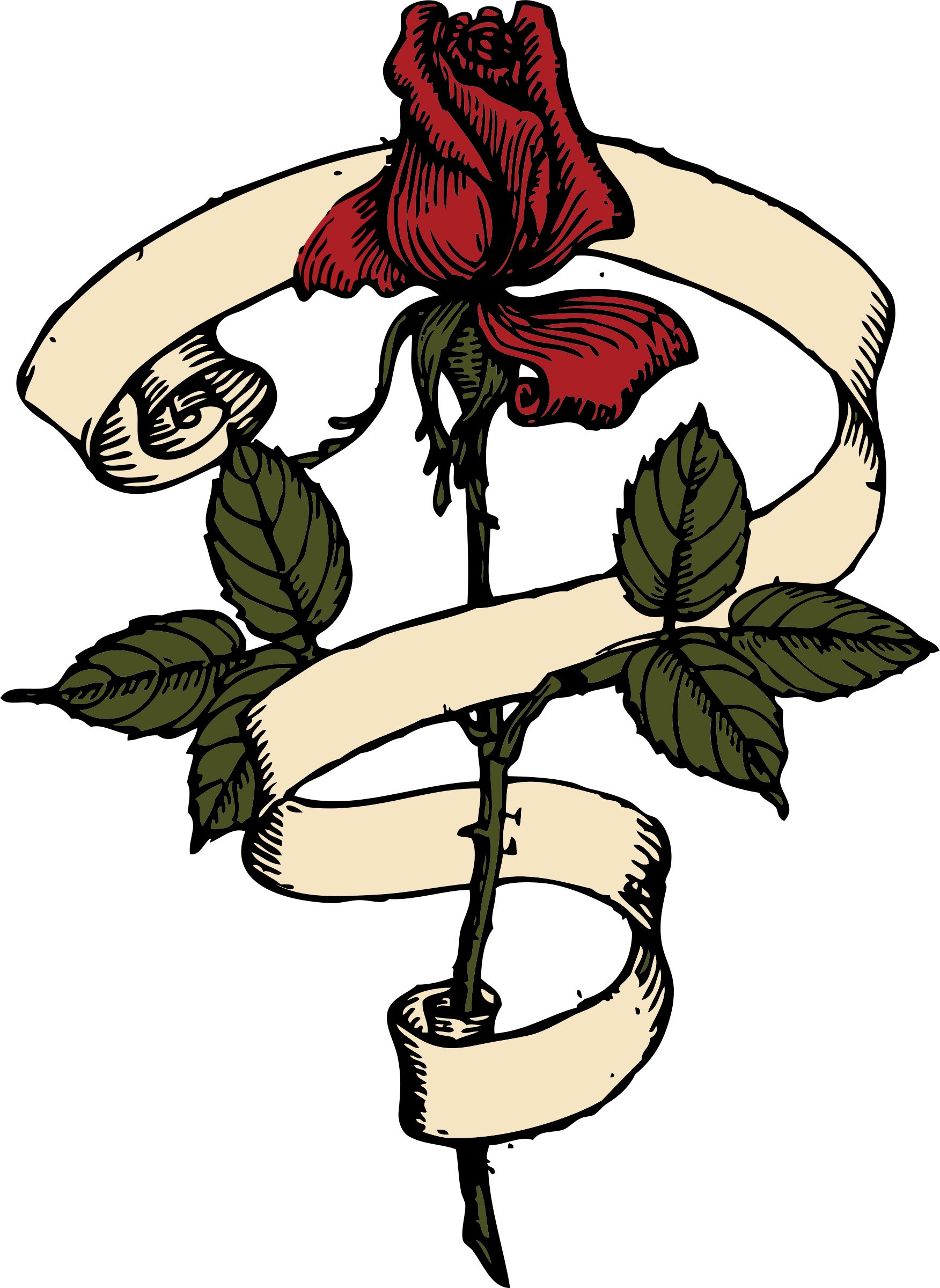 Scroll big image png. Clipart rose banner