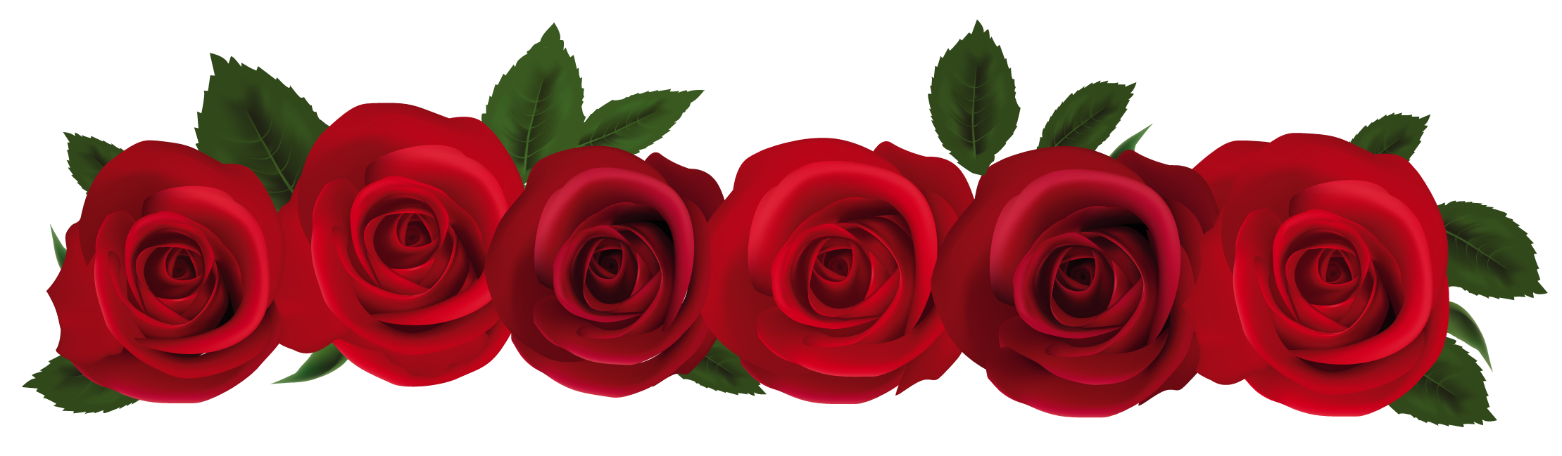 Red roses png gallery. Clipart rose banner