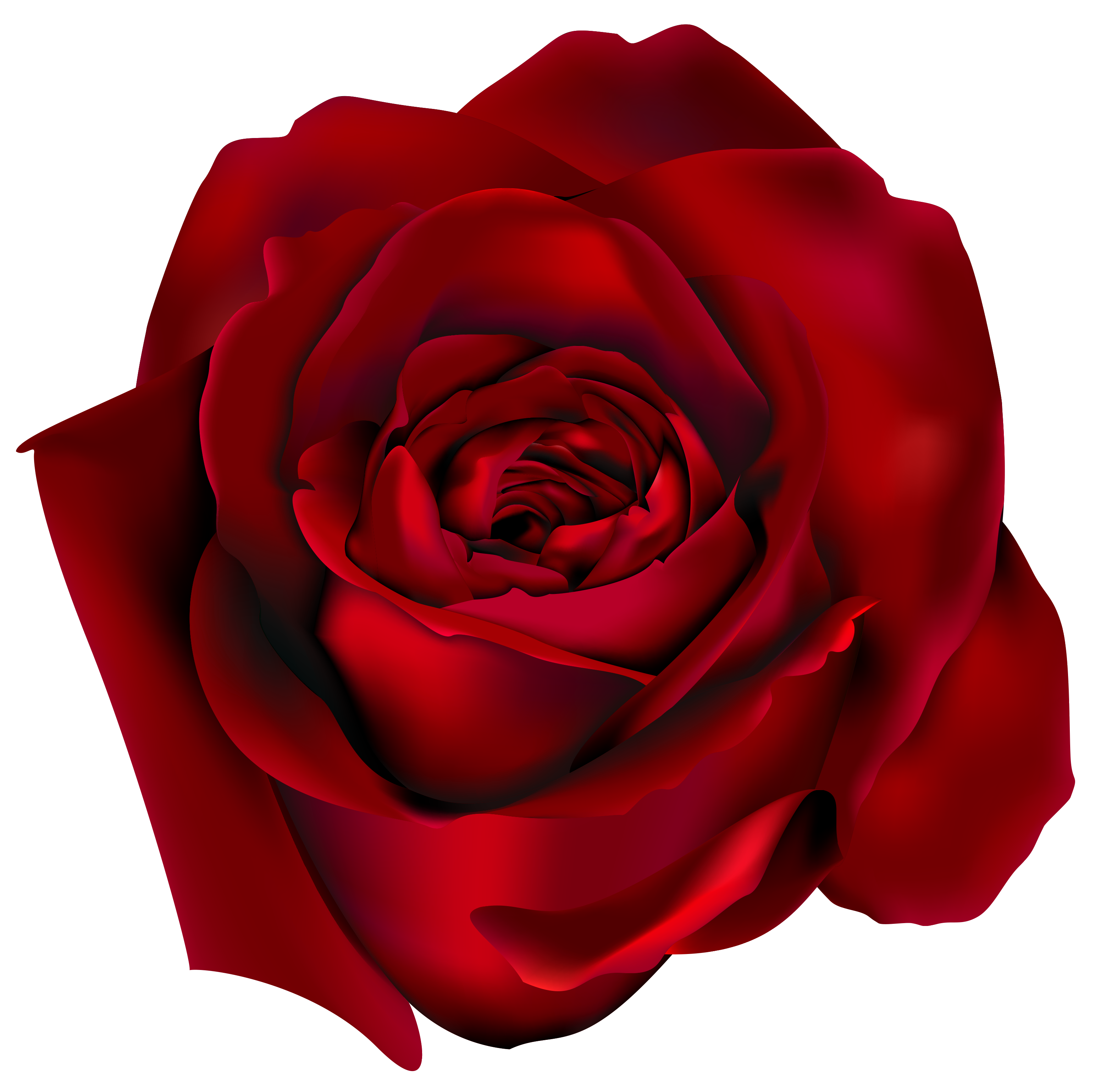 Transparent with png image. Clipart roses lace