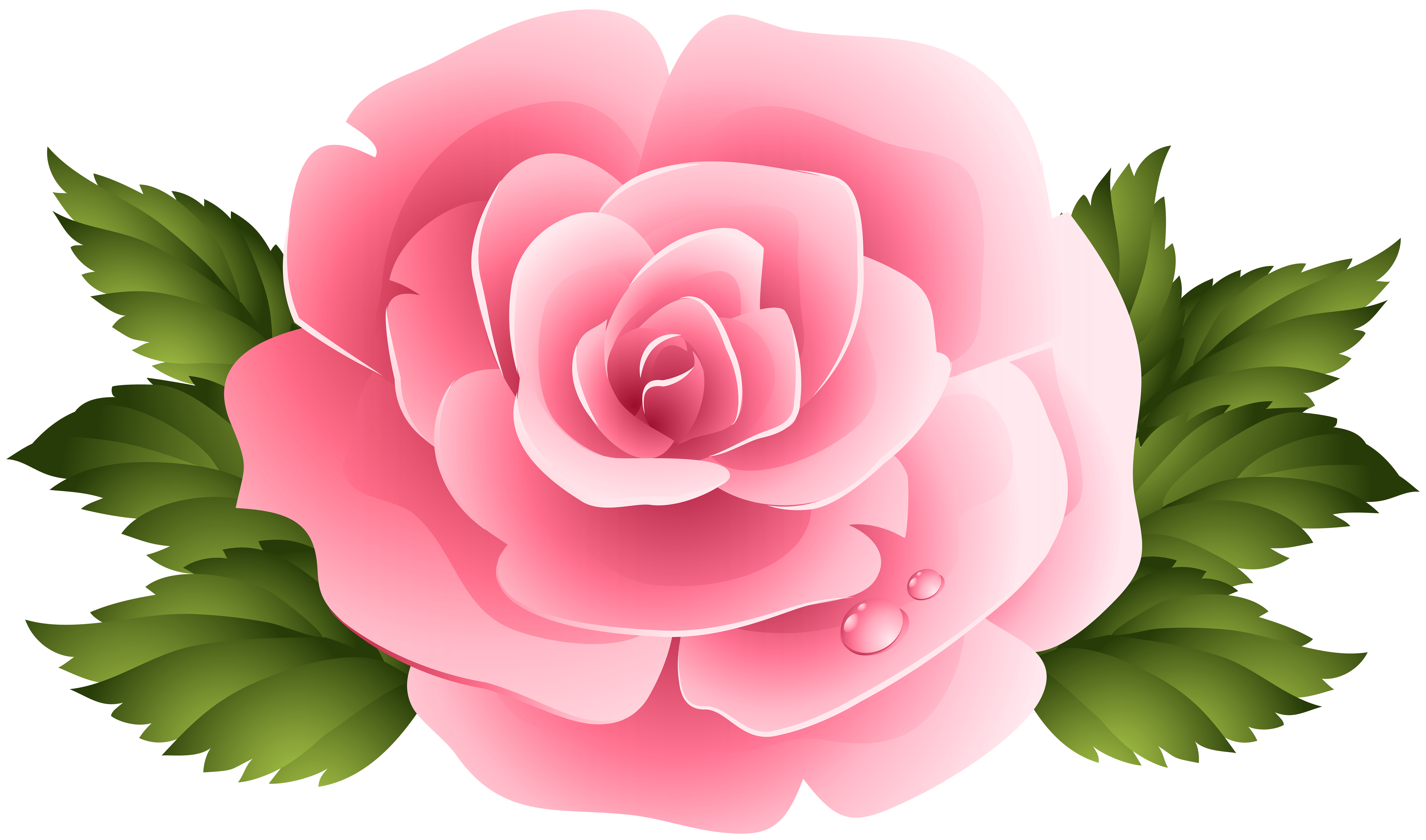 Clipart rose bed. Pin by on pinterest