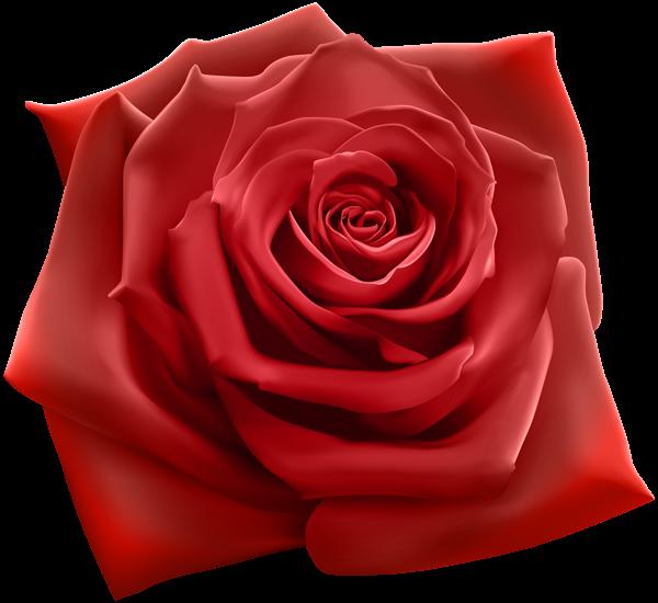 Red png image tarjeta. Rose clipart cross