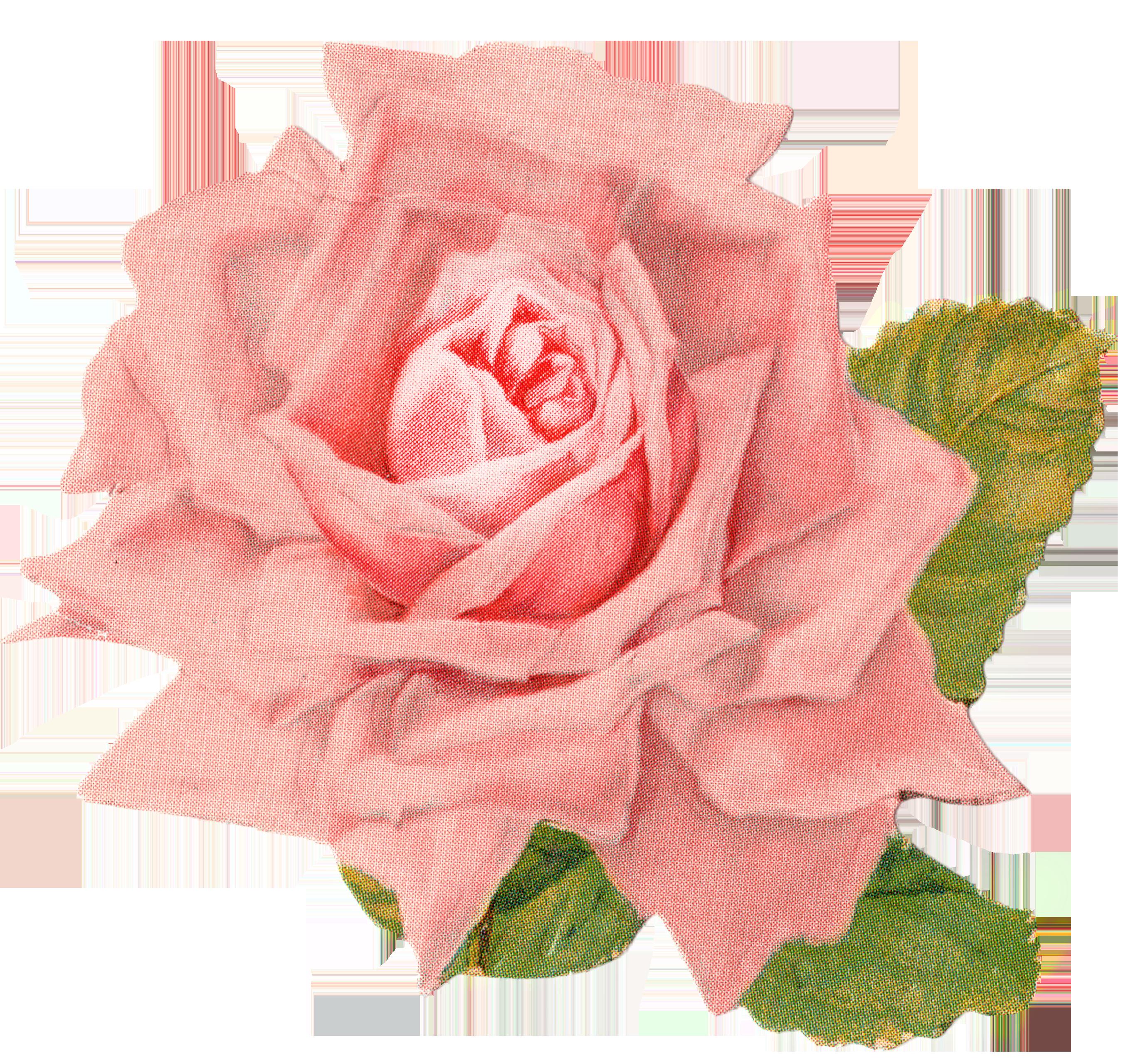 Clipart rose birthday. Beautiful vintage clip art