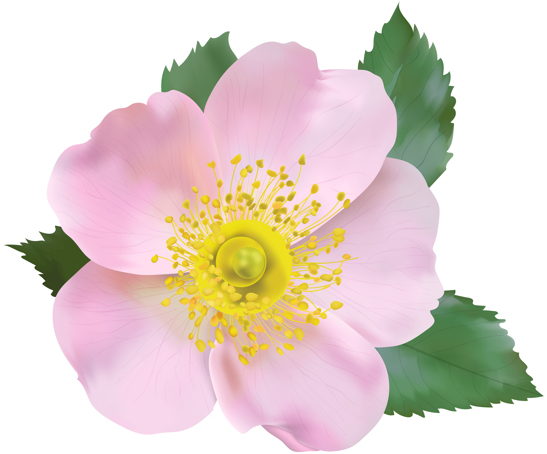 Png transparent clip art. Clipart rose blossom