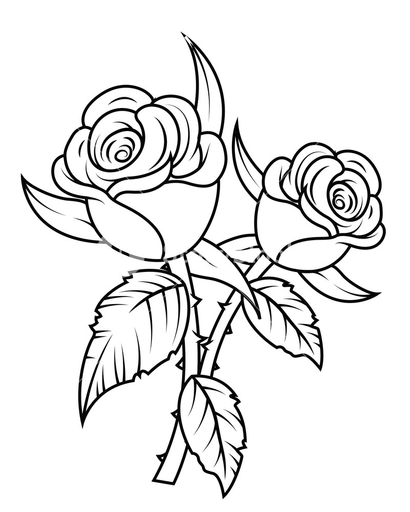 Clipart rose blossom. Flowers royalty free stock
