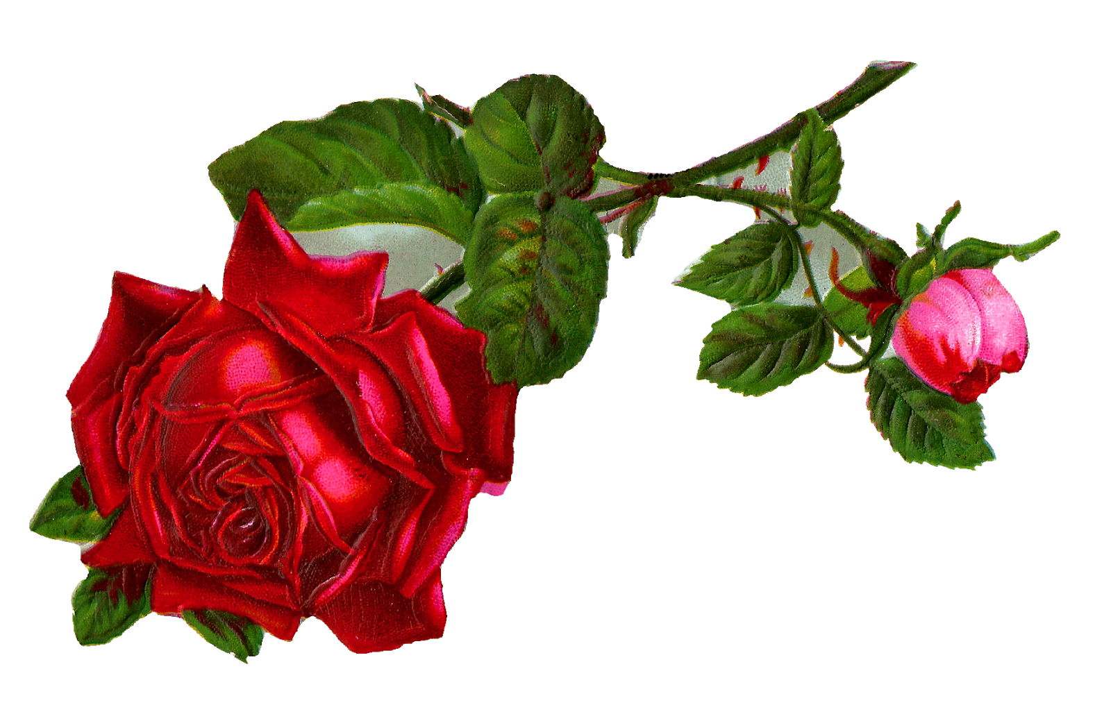 Antique images stock red. Clipart rose branch