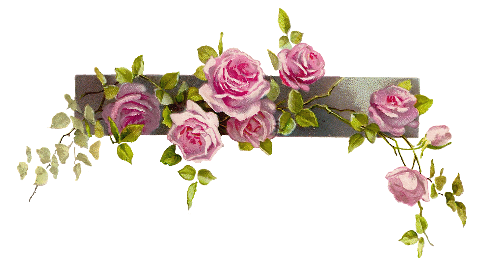Antique images free flower. Clipart rose branch