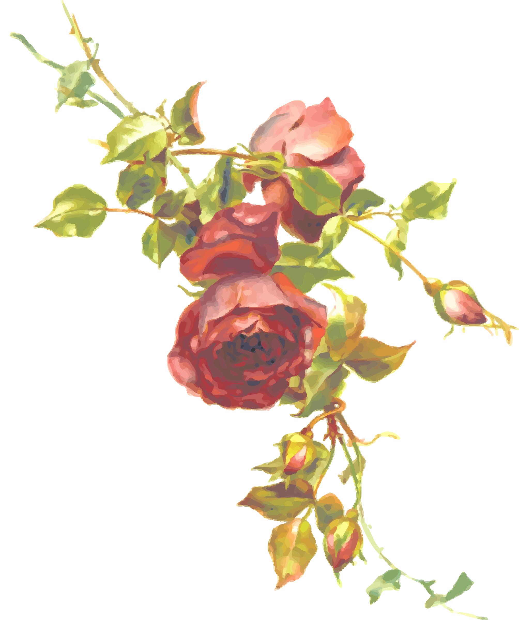 Clipart rose branch. Isolated big image png
