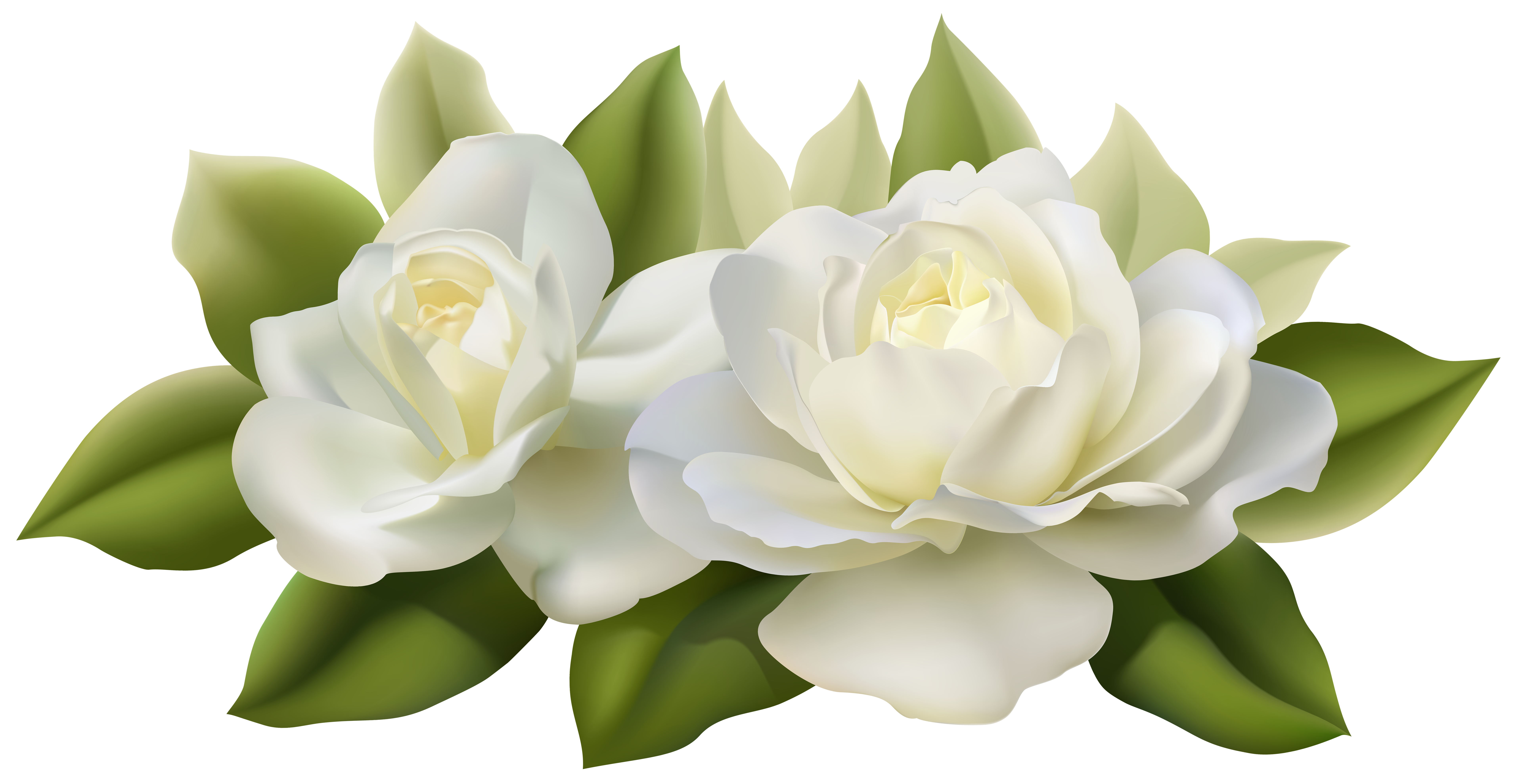 Clipart rose chalkboard. Beautiful white roses with