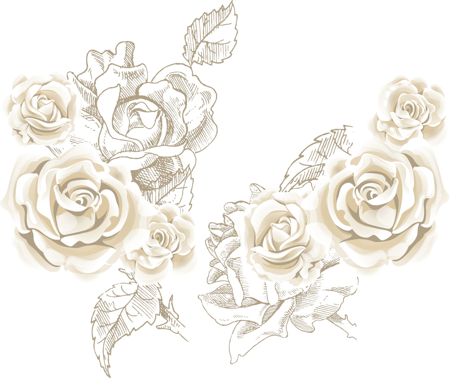 Clipart rose chocolate. Beach flower clip art