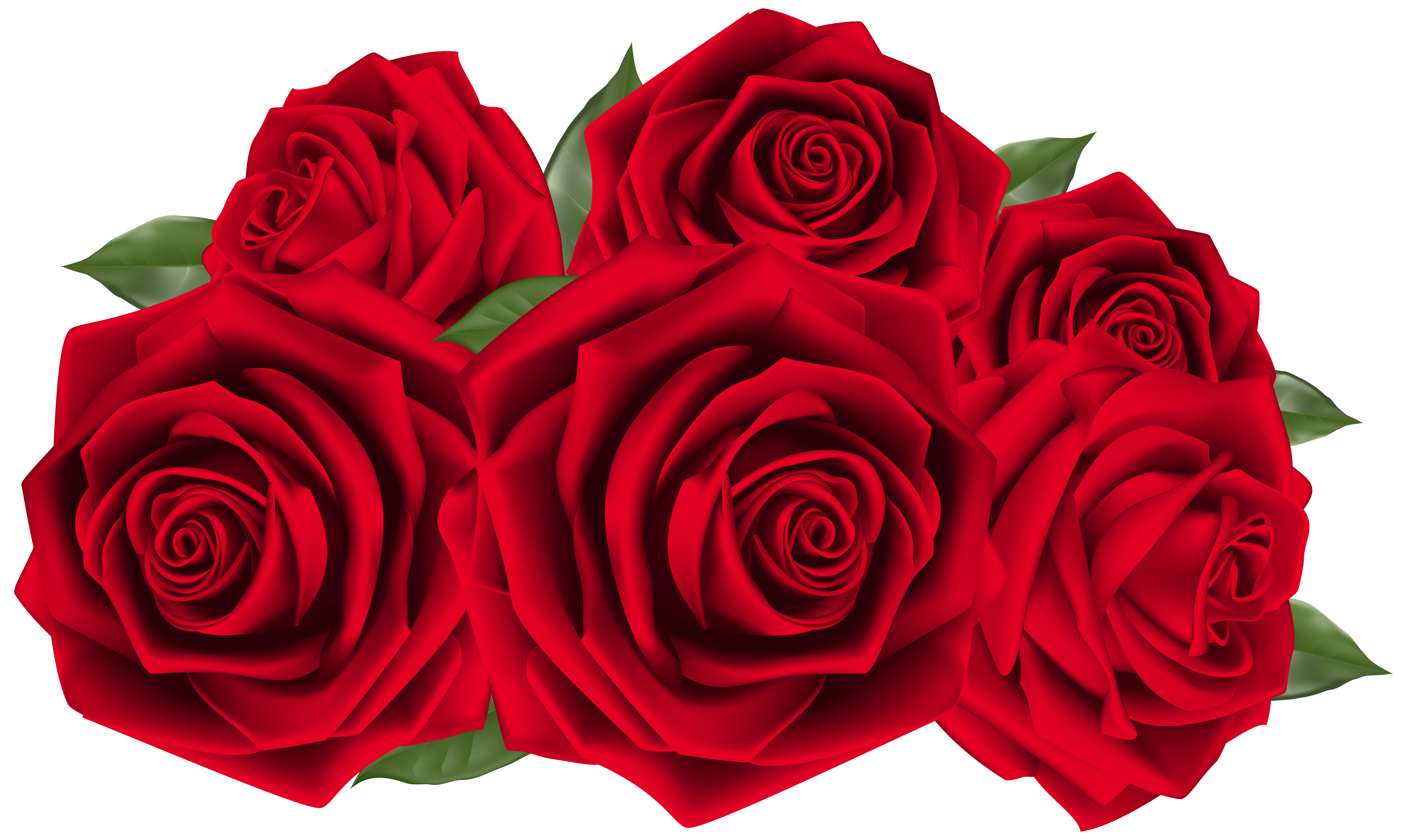 Roses png images. Beautiful dark red clipart