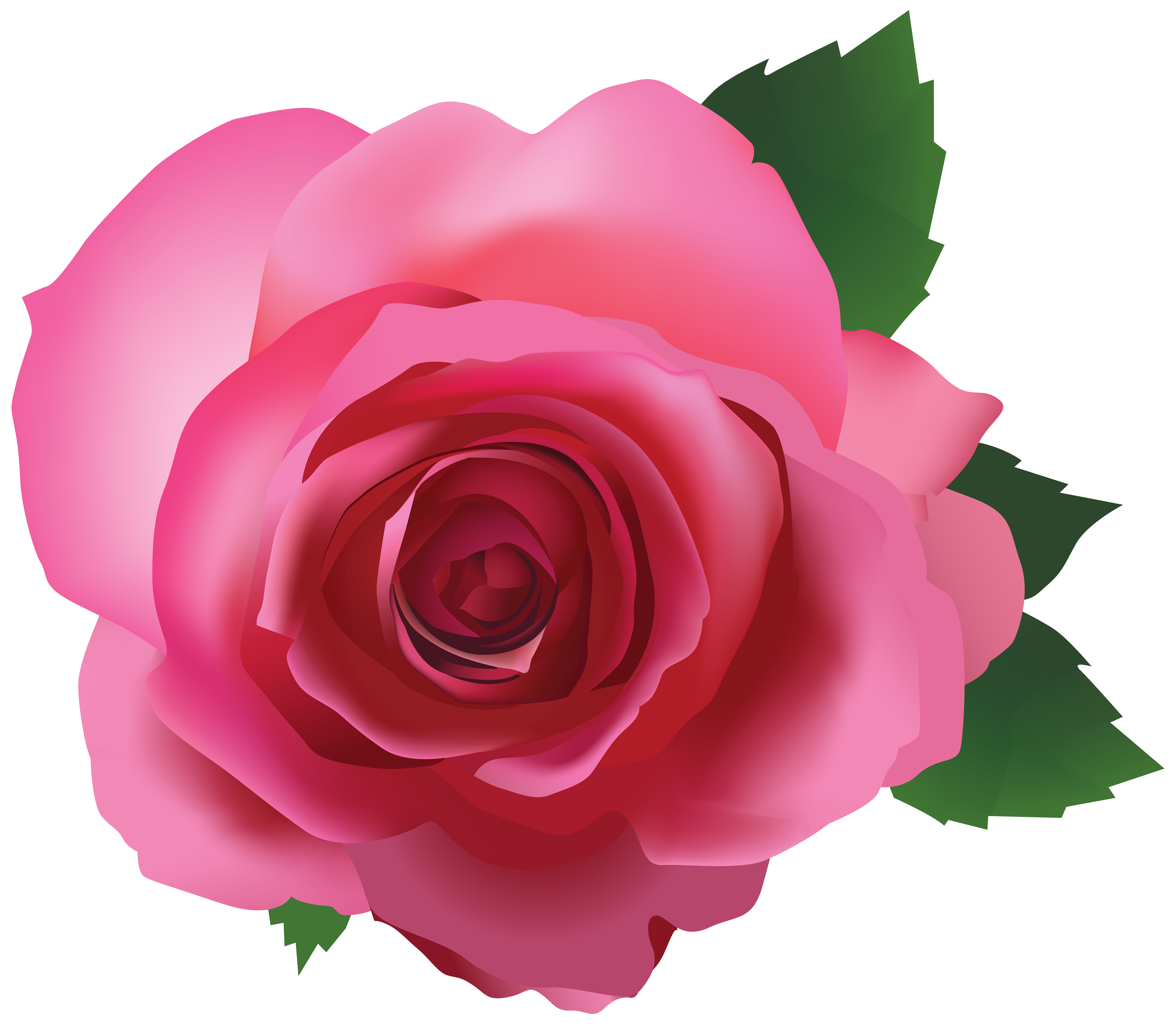 Clipart rose clear background. Pink transparent png image