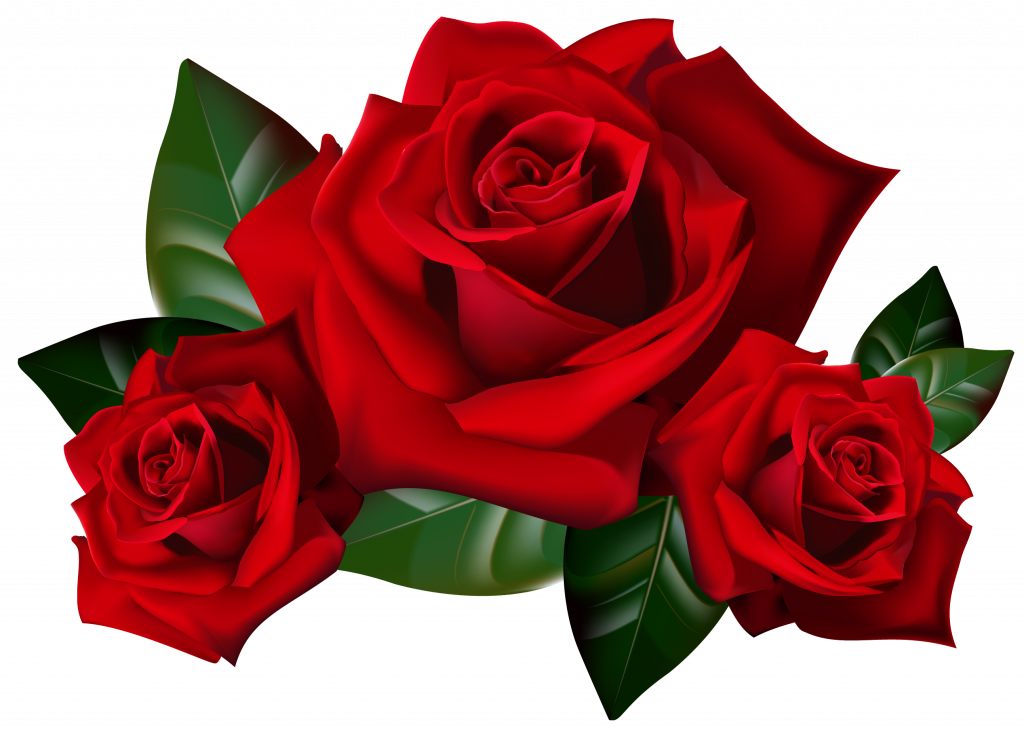 Top pictures of red. Clipart rose clear background
