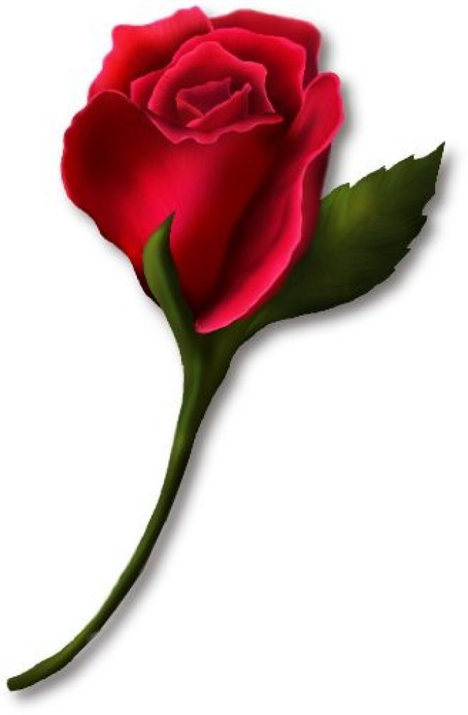 Red bud roses gray. Clipart rose curved