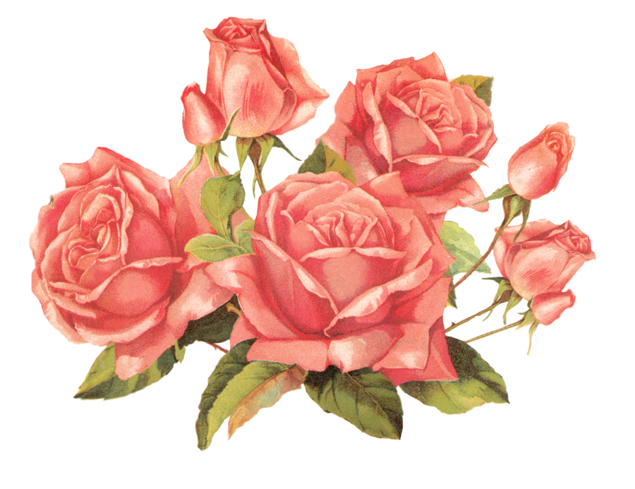 Rose pink by jinifur. Flower png deviantart