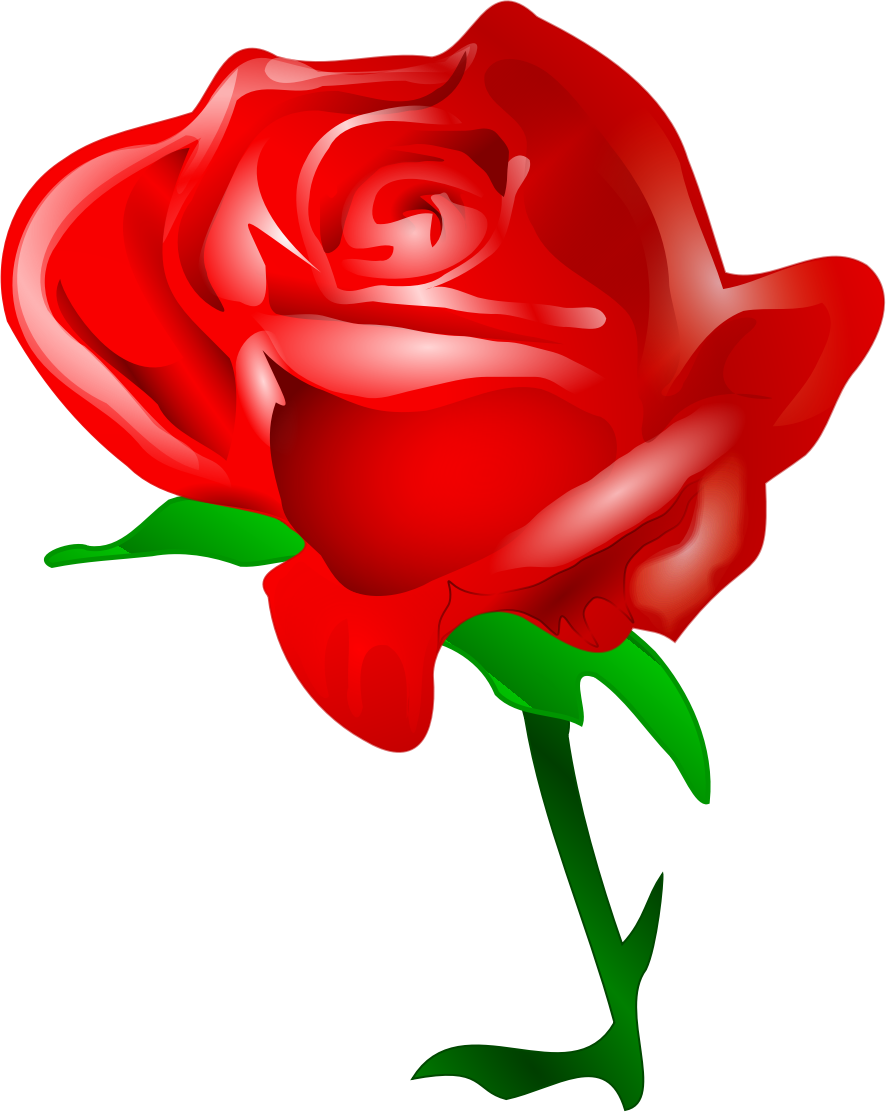 Red big image png. Rose clipart cute