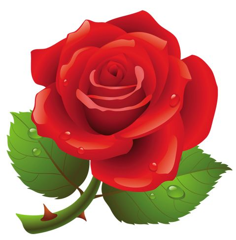 Rose clipart cute. Download roses red png