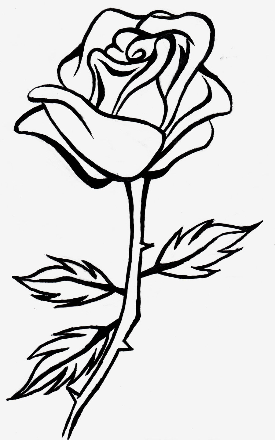 Free line drawing of. Rose clipart drawn