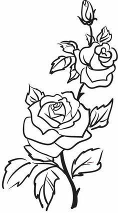 Roses flowers vine leaves. Clipart rose drawn