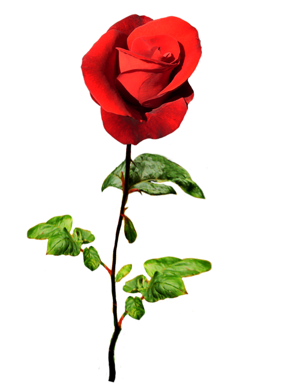 Clipart roses dying. Of valentine day red