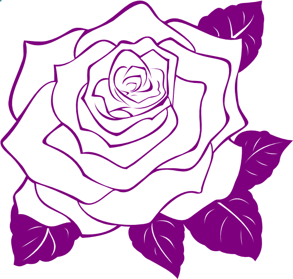 White rose with purple. Clipart roses vector