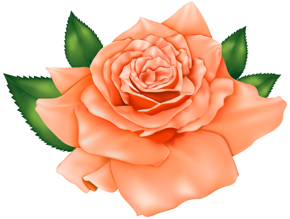 Clipart rose emoji. Beautiful orange png