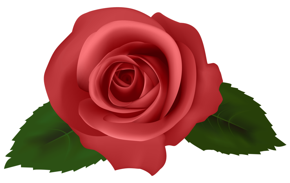 Rose red png . Clipart roses emoji