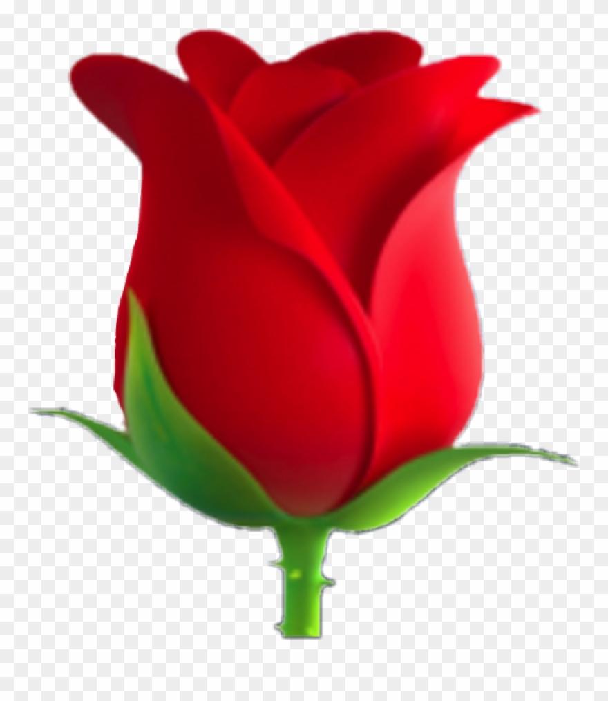 Rose png download . Clipart roses emoji