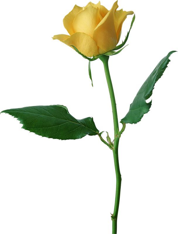Large yellow png gallery. Emoji clipart rose