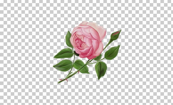 Garden roses cabbage png. Clipart rose english rose