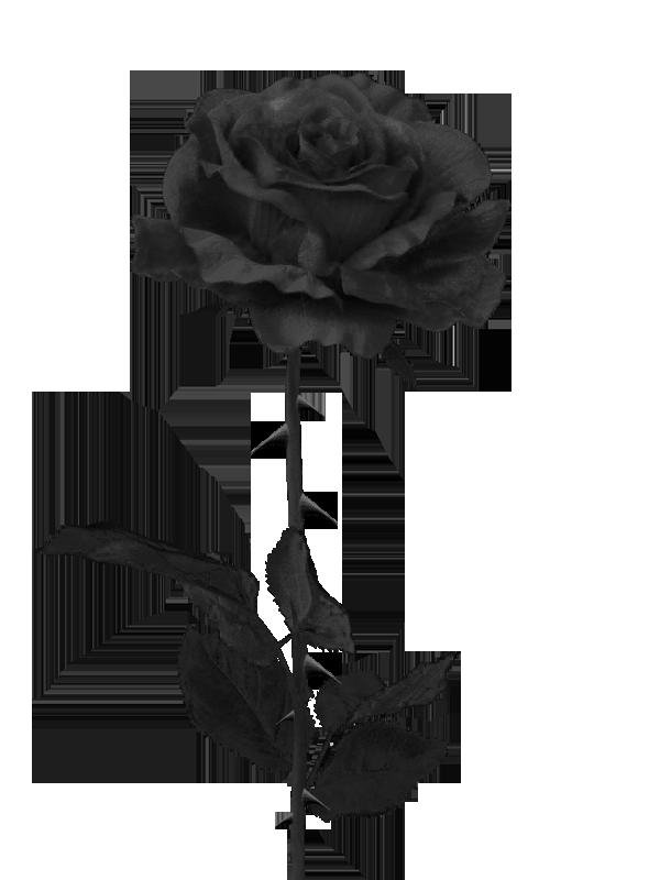 Clipart rose file. Image black weqiohf png