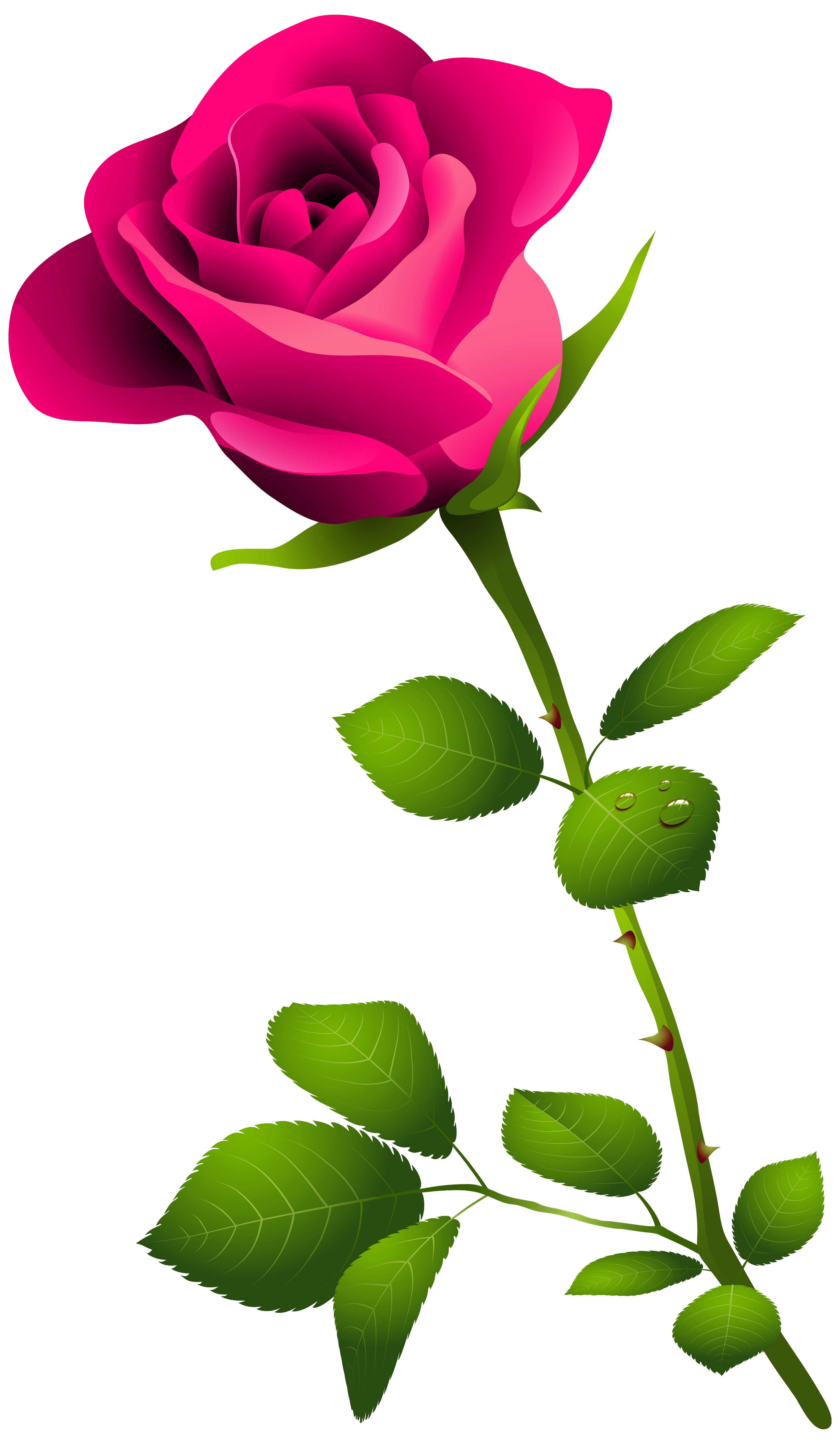Pink rose with clipart. Flower stem png