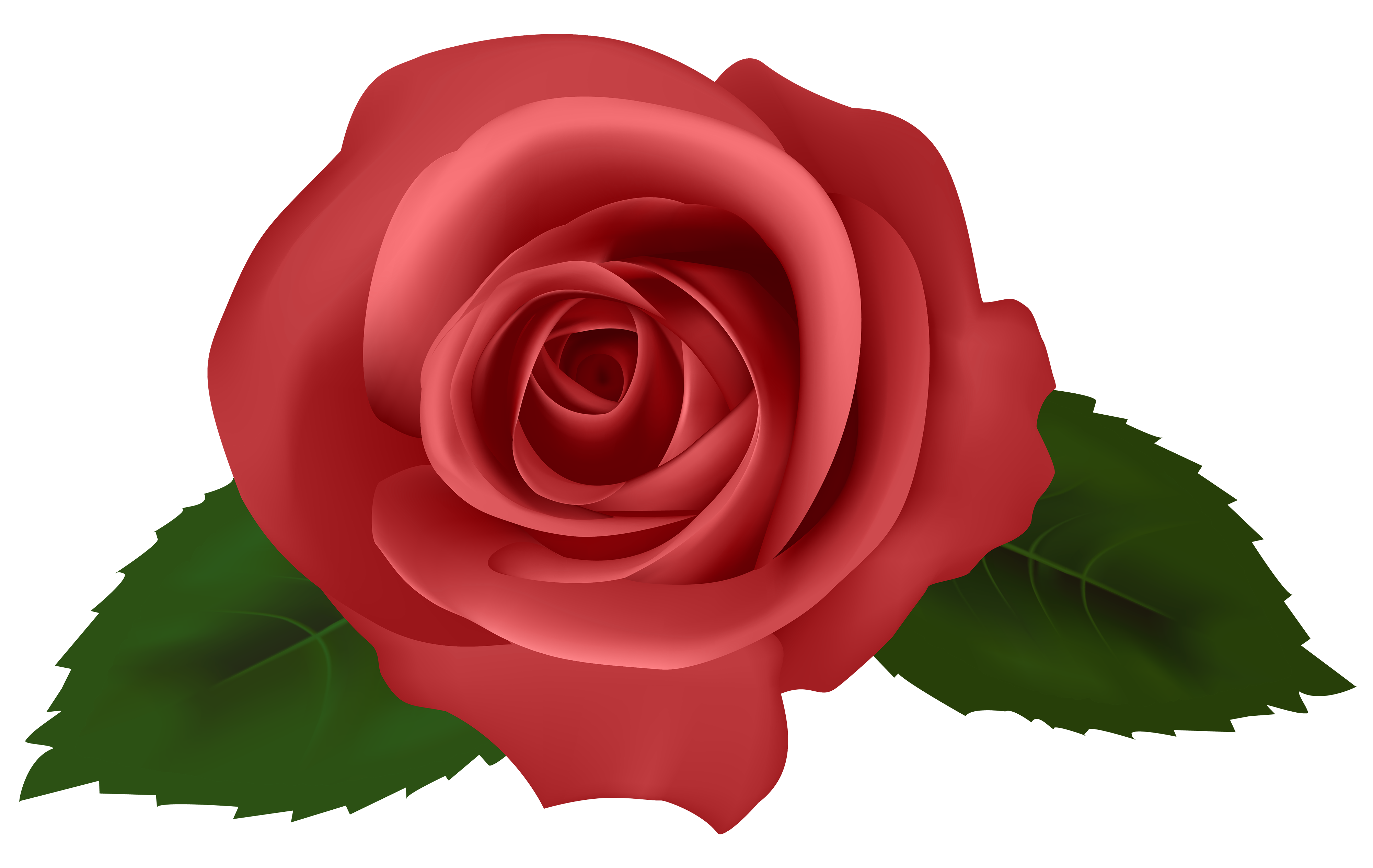 Rose red png best. Clipart roses knife