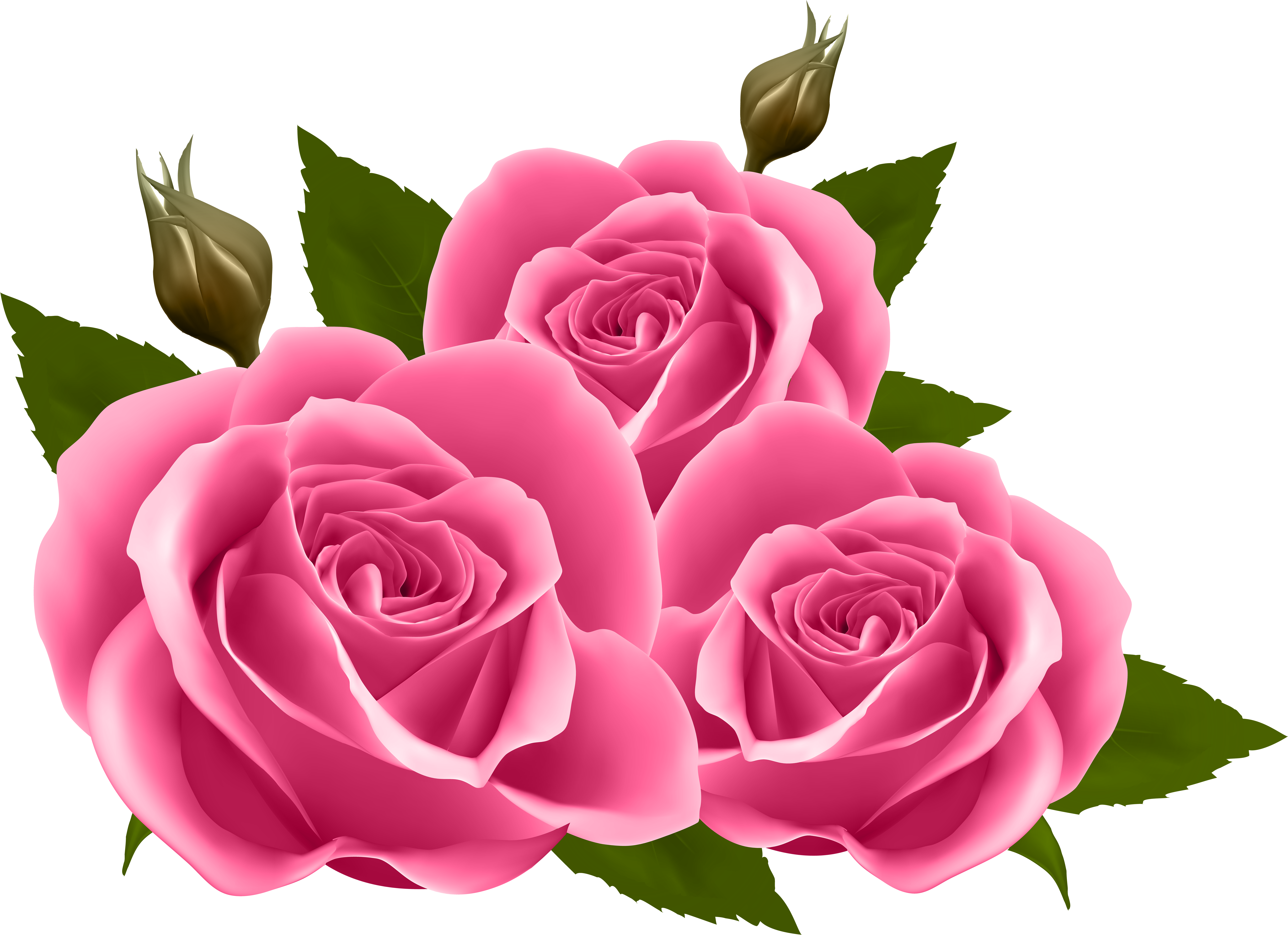 Hd pink images png. Clipart roses garden rose