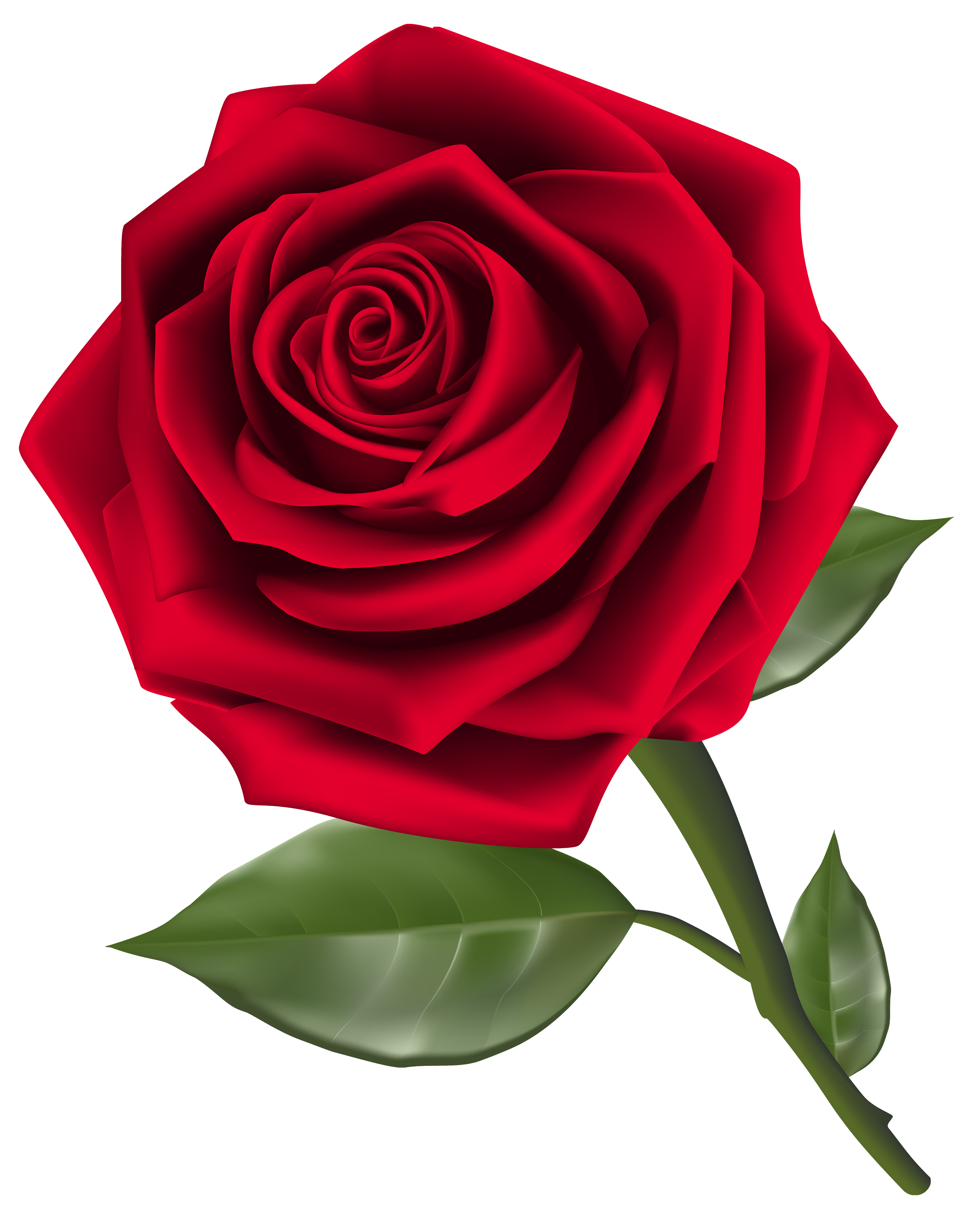 Clipart roses kid. Download rose free png
