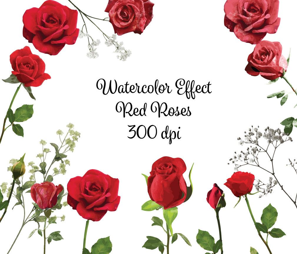 Clipart roses high resolution. Watercolor clip art graphic