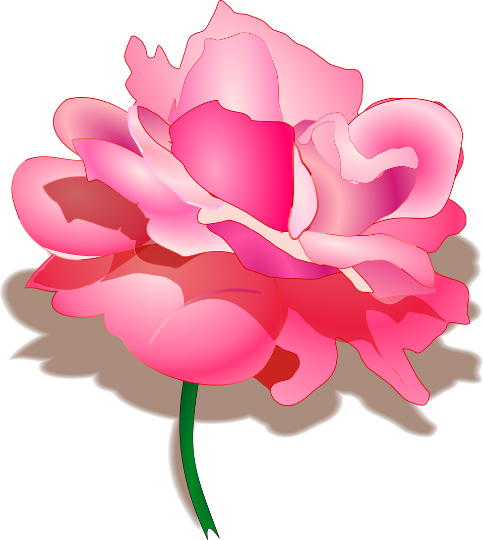 Free stock photo of. Clipart rose illustration