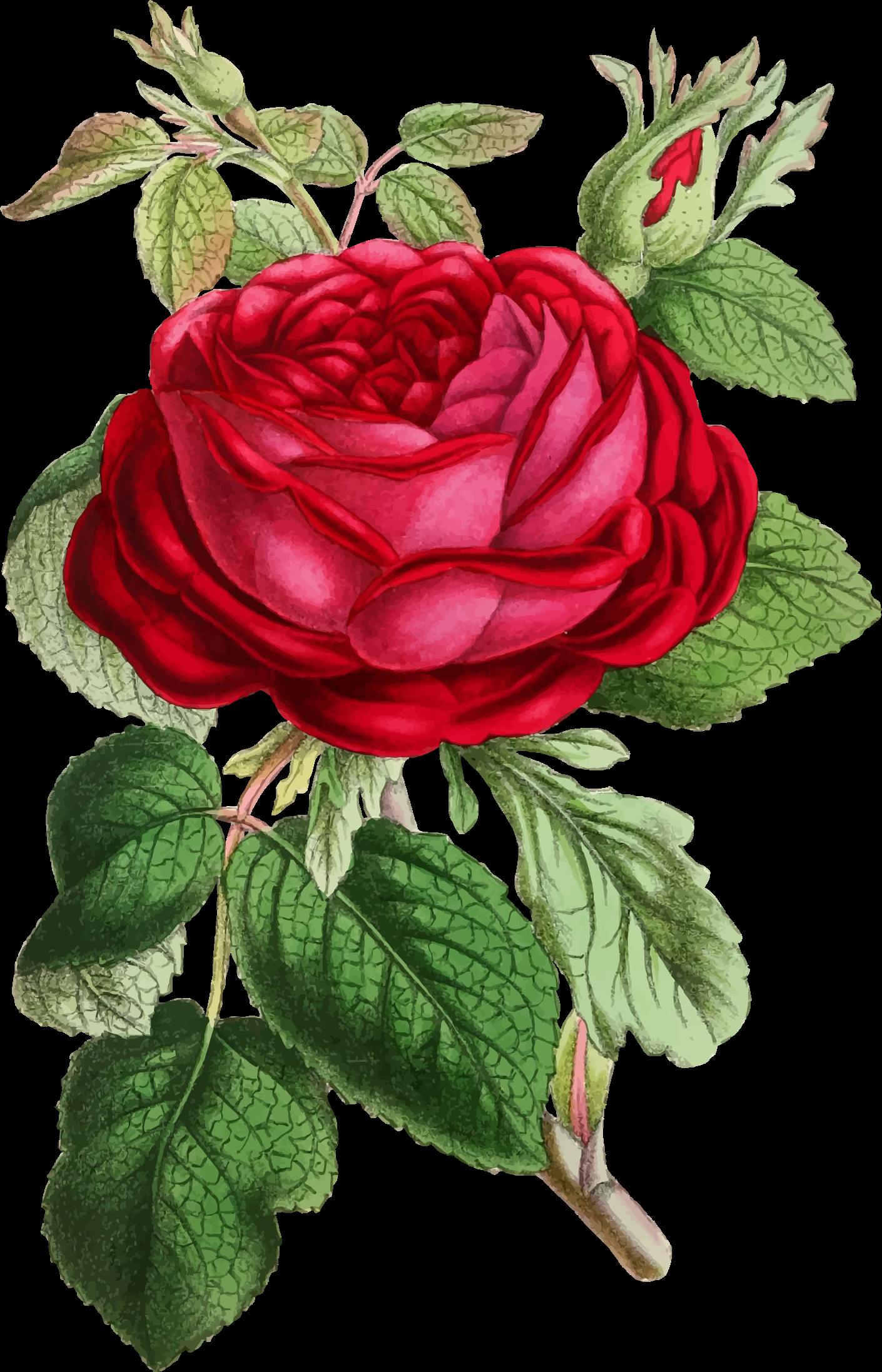Clipart roses illustration. Vintage rose big image