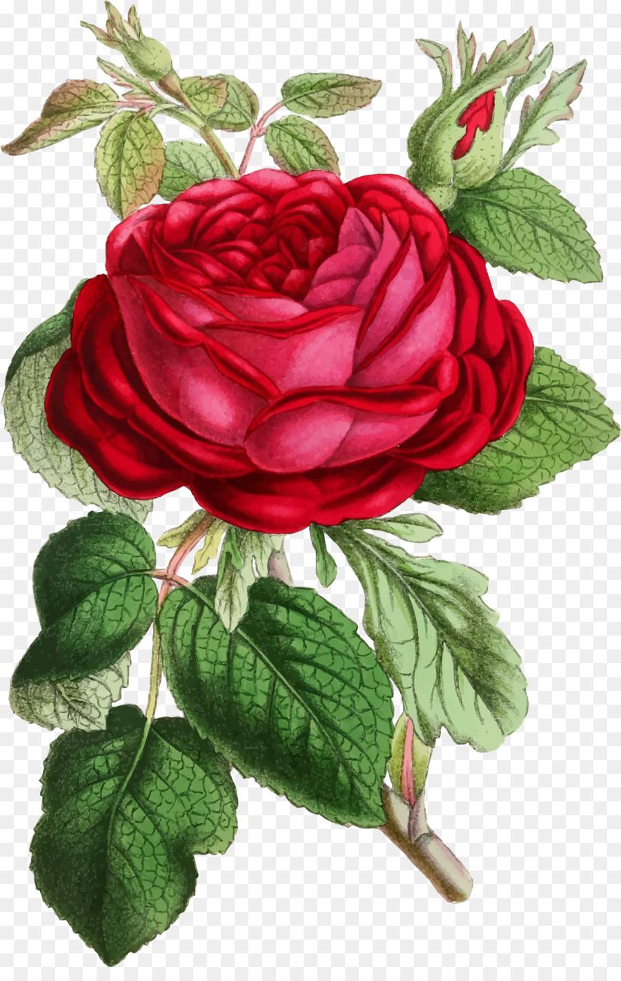 Flowers background rose flower. Clipart roses illustration
