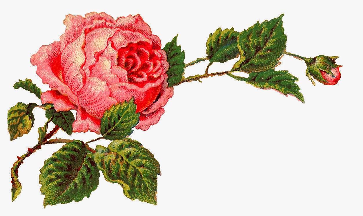 Rose clipart kid. Roses vintage corners clipartix