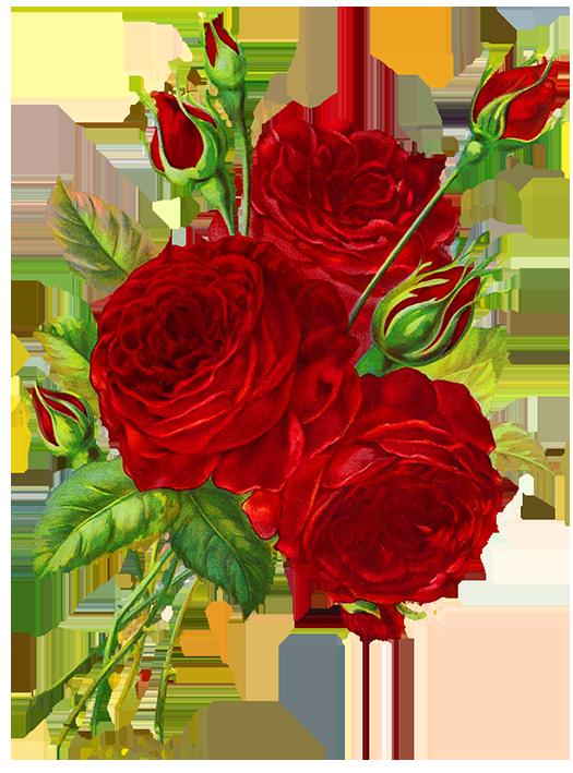 Red roses drawing pinterest. Scrapbook clipart modern flower