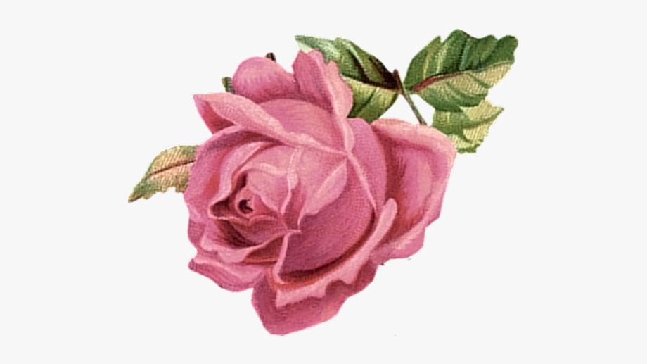 Clipart rose knife. Pink flower vintage png