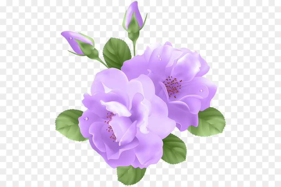 Flowers background lavender purple. Clipart rose lavendar