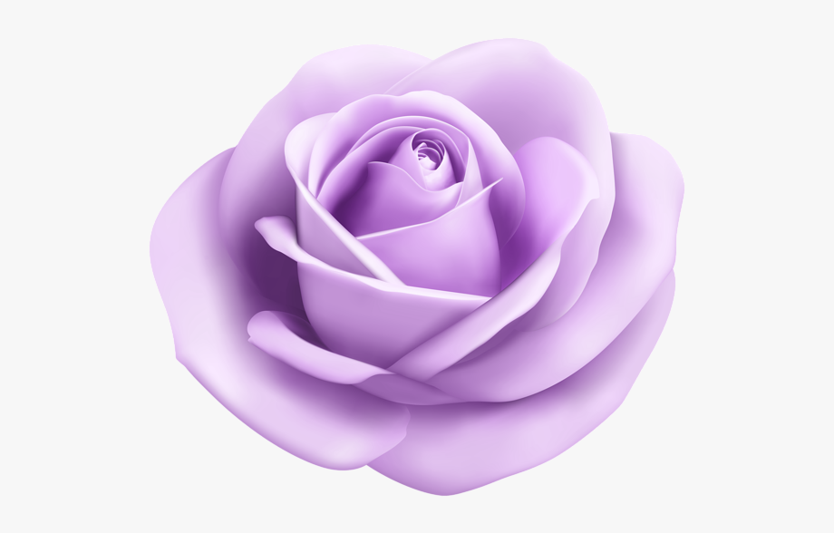 Clipart rose lavendar. Lavender png light purple